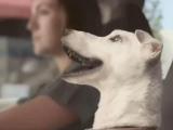 Volkswagen & Dogs